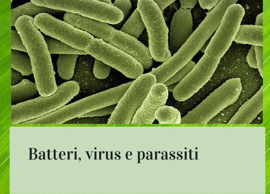 I principali batteri alimentari e le tossinfezioni